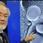 """عملية الإلتهام الذاتي """"autophag means body eating itself""""..- الطبيب العالم اليابانى بورشينوري أوسومي .."""
