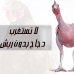 دجاج من غير هدوم..أو بدون ريش..وإنتهى عصر النتافات..