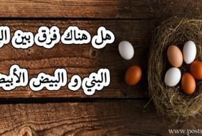 ماهو الفرق بين البيض البني والبيض الأبيض..وما هي ألوان البيض المنتشرة حول العالم ..
