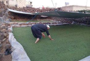 """السوريون يزرعون السرخس أو """"الآزولا"""" ..من أجل الدواجن والأبقار والأغنام والماعز..- مشاركة: Salman AlAhmad."""